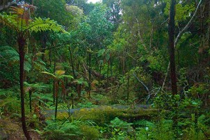 Ulva_Island_rainforest