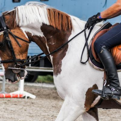 Biomechanics for horse riders
