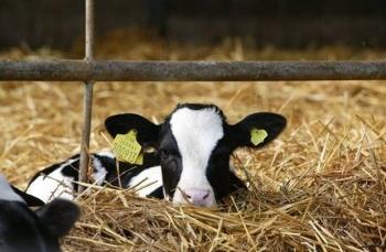 Kathi Knapman – Accountant and Dairy Farmer