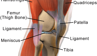 Knee Anatomy Side view
