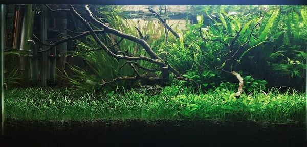 Small Aquarium Plants