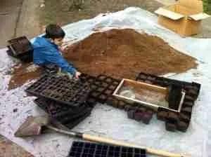 potting soil media
