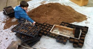 potting soil media