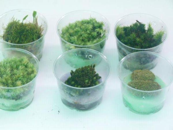 Growing Moss Indoors Made Easy Biotope One