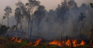 whats-being-done-to-stop-palm-oil-plantations-from-destroying-indonesias-rainforests-1453154385