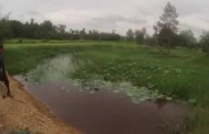 Habitat of wild Betta smaragdin