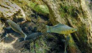 Underwater photo of biotope on a fish collecting trip.
