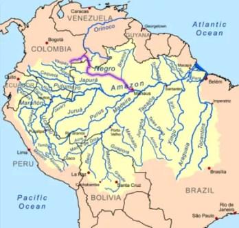 Rio Negro Blackwater Igapos Amazon Biotope