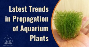 Latest Trends in Propagation of Aquarium Plants