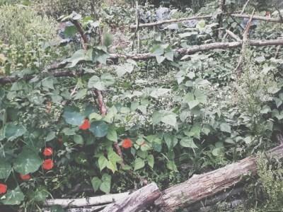 bewachsenes Beet in Mischkultur