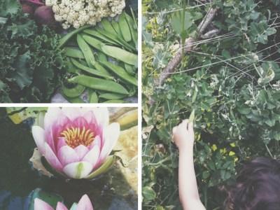 Saatgut sparen für deinen Selbstversorger Hof