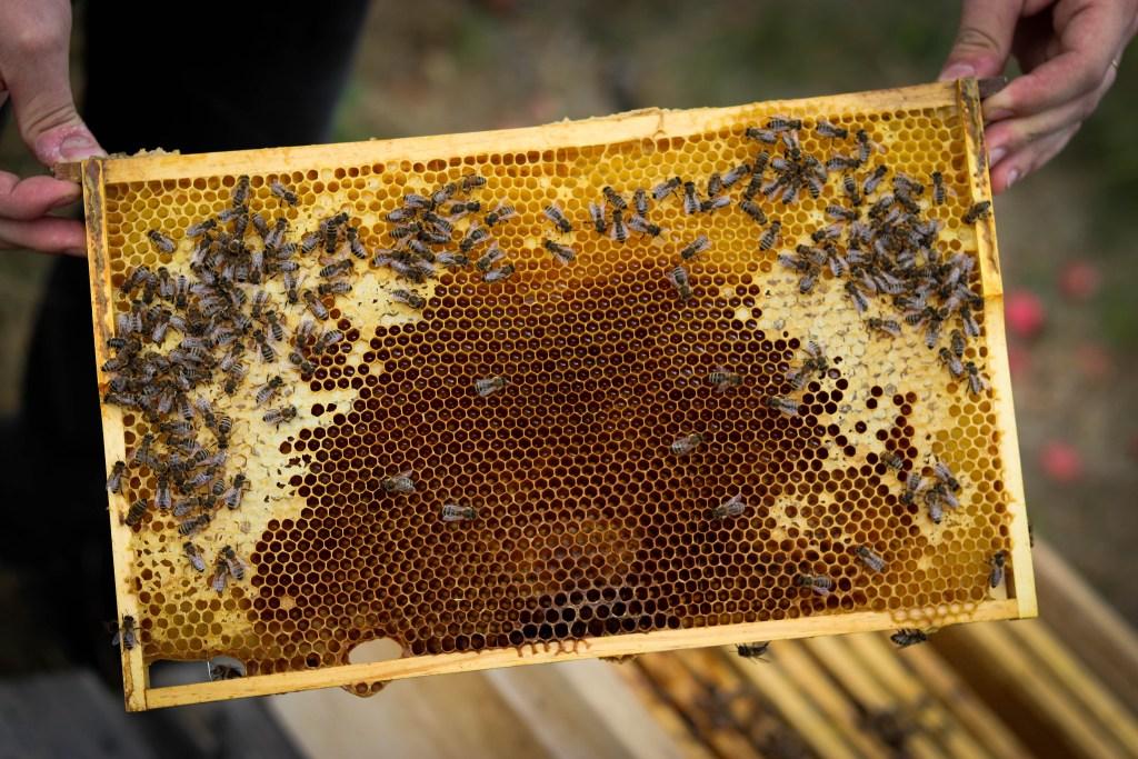 Bienenwabe vom Startup Honigwerkstatt Elbtalaue