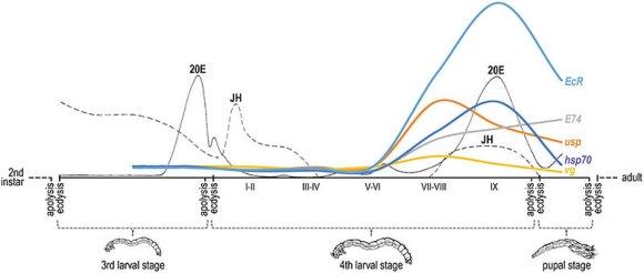 Esquema de los niveles de expresión a lo largo del desarrollo de los genes estudiados