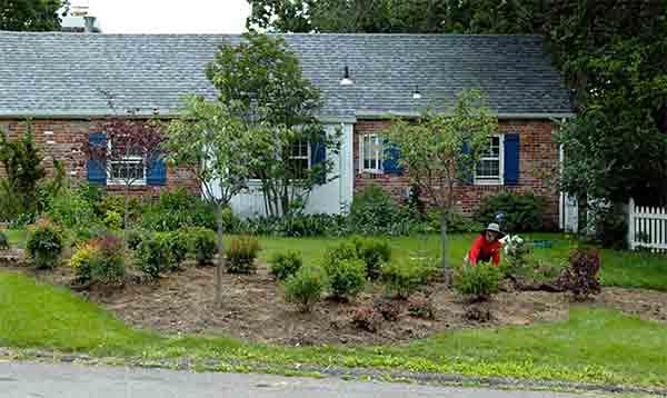 2005-May-sideyard-planting