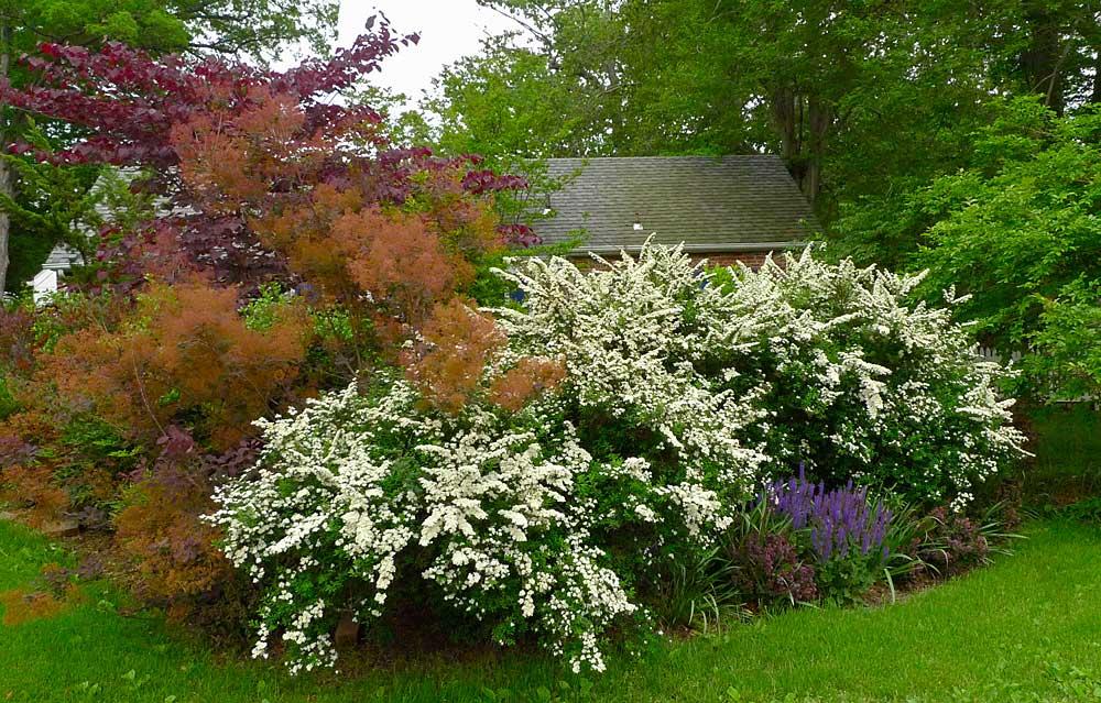 2011-May-sideyard