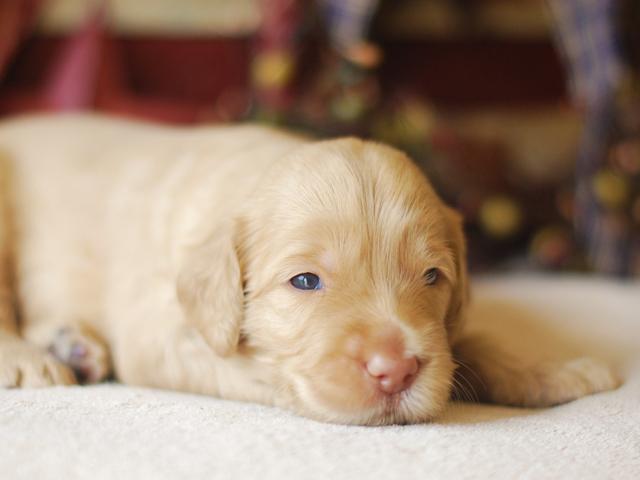 Barney-3-weeks