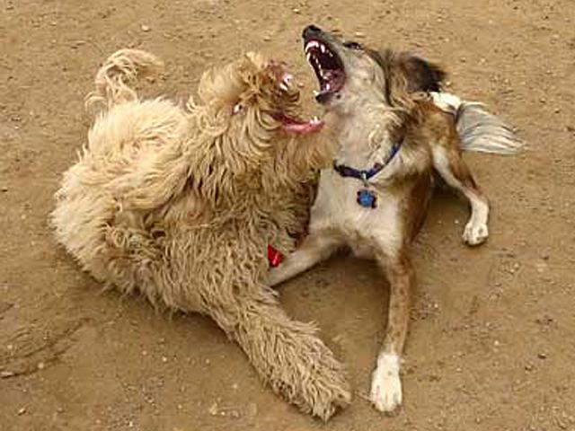 Fiercely playful