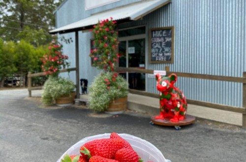 Ricardoes Tomatoes & Strawberries, NSW