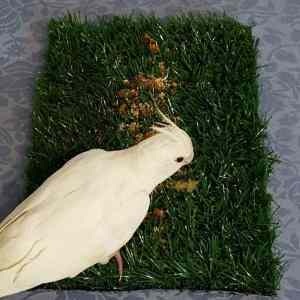 Great Bird Foraging Toy From Tinkle Turf For Dogs. Grass Mat Only