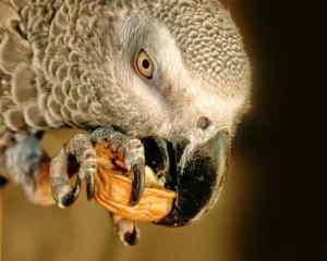 How Bulk Re-Bagged Bird Food Can Make Your Bird Sick
