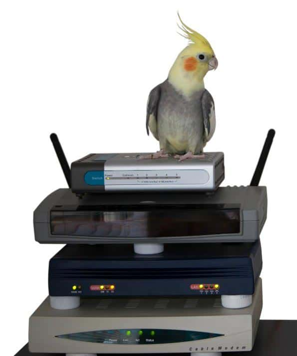 Is corporate management of your bird – the future?