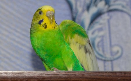 What kind of parrot should I get and how DO birds talk?