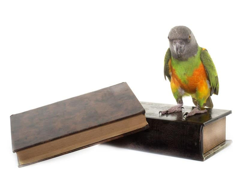 Find out how much you know about keeping birds and parrots with this exam – even earn a certificate!