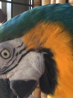 How Do I Treat Macaw Mites