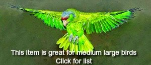 amazon parrot in flight with wings spread