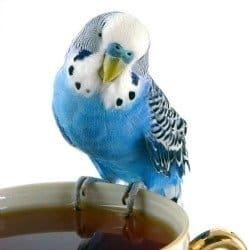 Smallest Bird