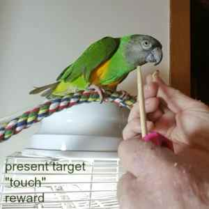 Recent caged bird keeper videos posted by Windy City Parrot