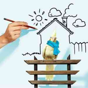Cockatiel-scarf-fence-house-winter-hand-draw