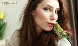 What should a 1st time bird owner know before they buy?
