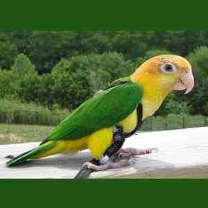 Aviator Flight Harness & Leash for 110 – 190 gram Birds Xtra Small Black