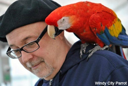 older man wearing beret hat with scarlet macaw parrot on his shoulder