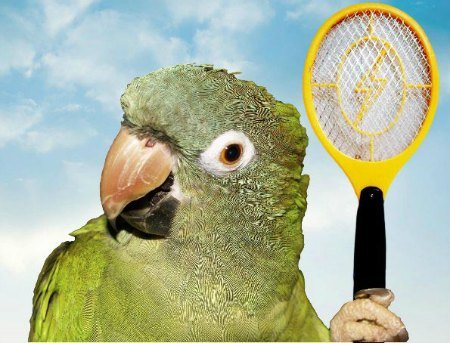 amazon parrot holding insect killing racket