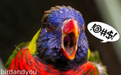 oiseau crie
