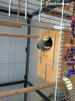 cage montana birdandyou1
