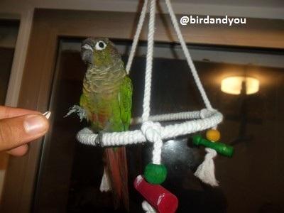 Balançoire en corde pour oiseaux