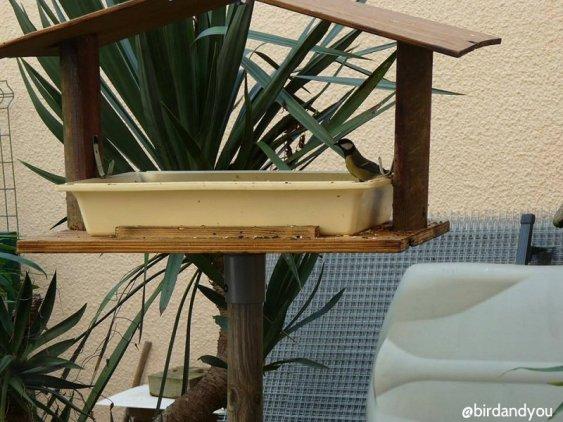 restaurant pour oiseaux du ciel bird and you. Black Bedroom Furniture Sets. Home Design Ideas
