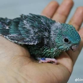 bébé perruche catherine turquoise histoire 2-5