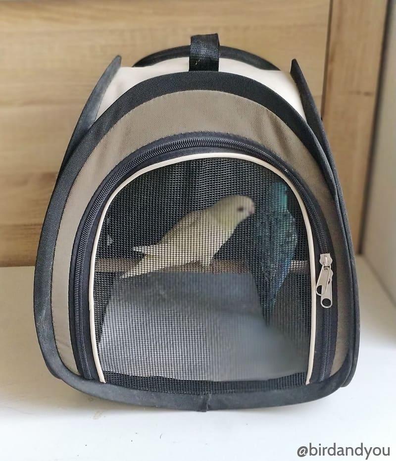 sac de transport pour oiseaux