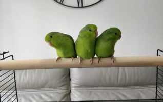 Cage NEO Jili pour oiseaux-Avis
