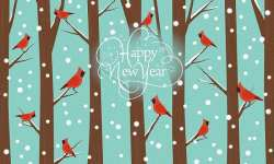 bonne-année-2020-Bird-and-you