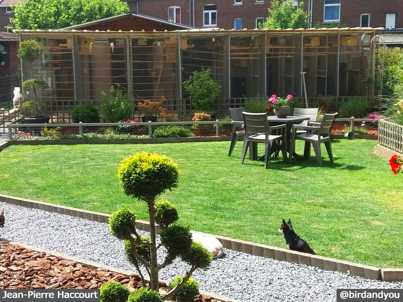 Jardin avec des volières extérieures pour grandes perruches: Éleveur de touis céleste en mutations-Belgique