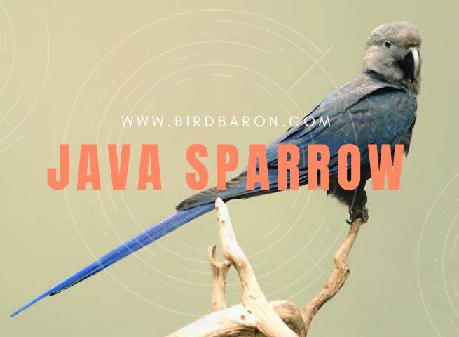 Spix's macaw – Facts | Size | Habitat | Lifespan | Population