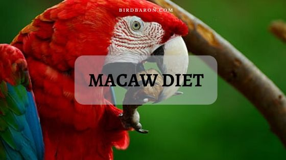 Macaw Diet – What Should and Shouldn't a Macaw Eat?