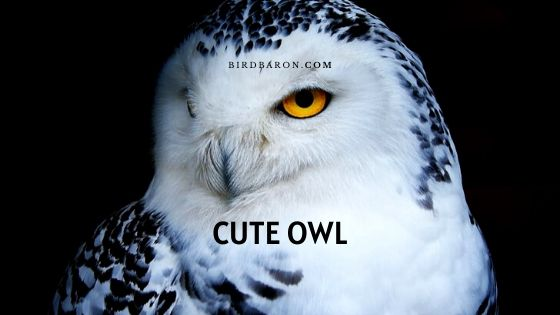 Cute Owl Description Life-cycle and Living Style