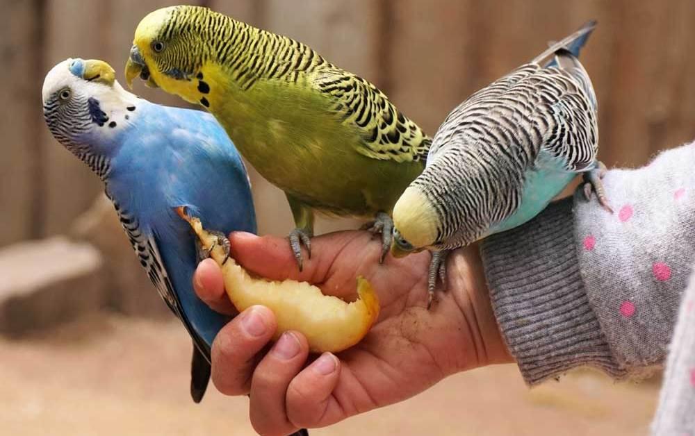 Essential Bird Feeding Tips for Beginners for Health, Nutrition