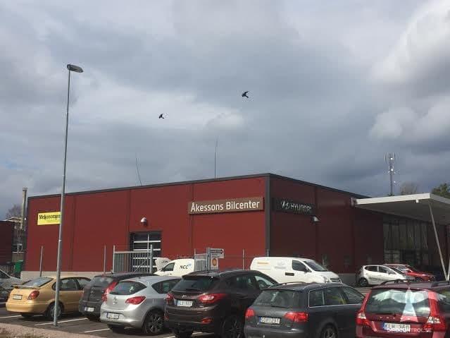 Flygande fågelskrämmor monterade på Åkessons bilcenter i Leksand